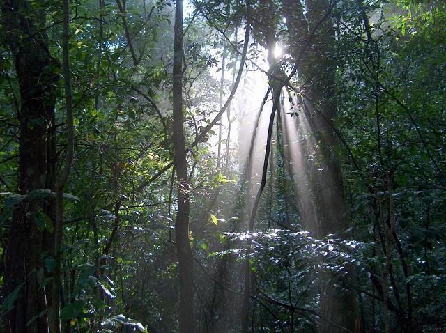 Udawattakele Forest, Kandy