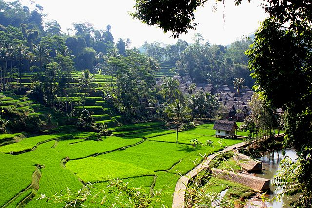 Beautiful Terraced Paddy Fields in Bali
