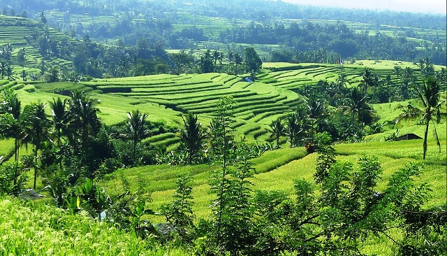 Jatiluwih Terraced Paddy Fields