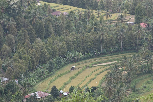 Munduk Terraced Paddy Fields in Bali
