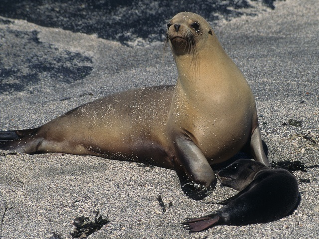 Sea Lions of Galapagos Islands