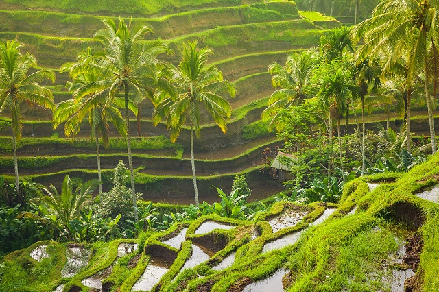 Sidemen Terraced Paddy Fields in Bali