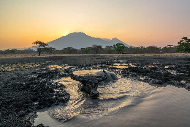 Baluran National Park, Indonesia