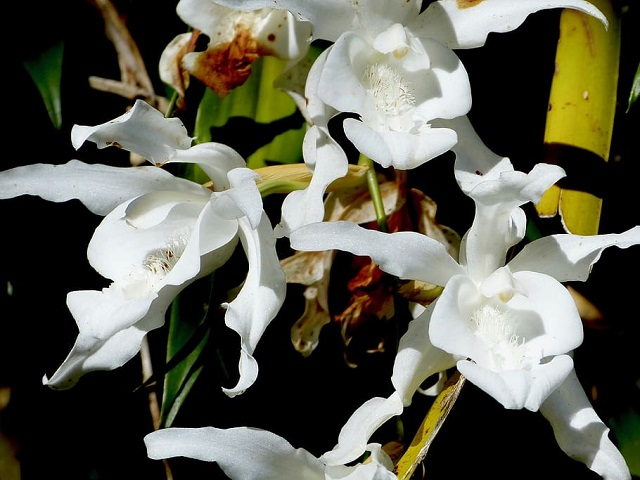 Orchid flower in Reunion