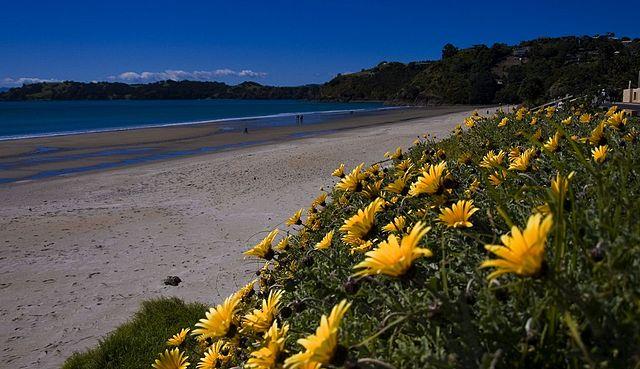 New Zealand Islands Waiheke Island