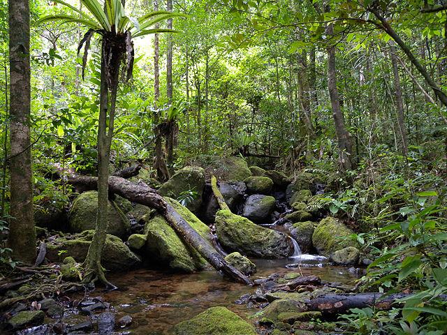 Masoala National Park, Madagascar