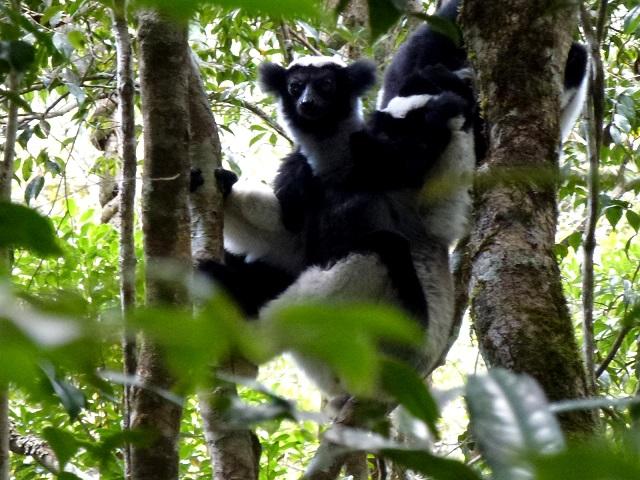 Perinet Reserve, Madagascar Island