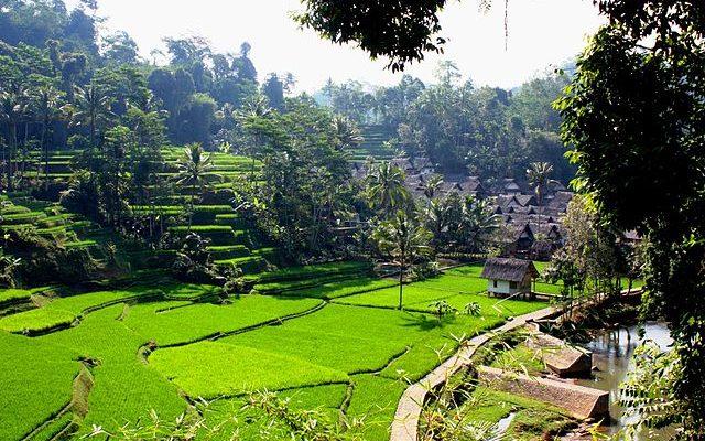Beautiful Terraced Paddy Fields in Bali
