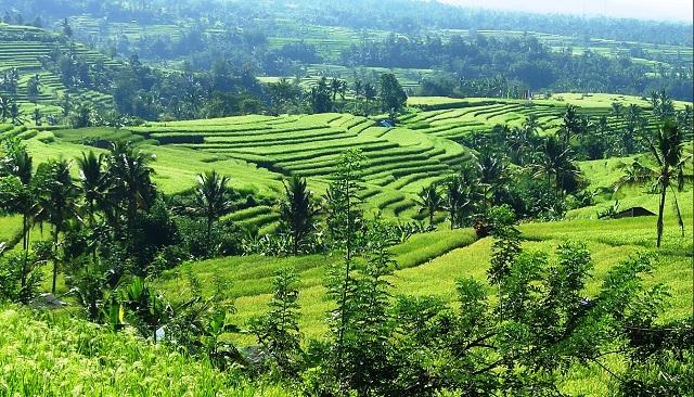 Jatiluwih Terraced Paddy Fields