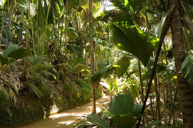 Seychelles Islands Vallee de Mai nature reserve