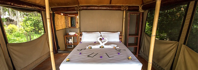 Beachfront Safari Rooms