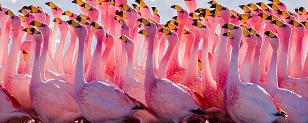 Wildlife Watching Flamingoes
