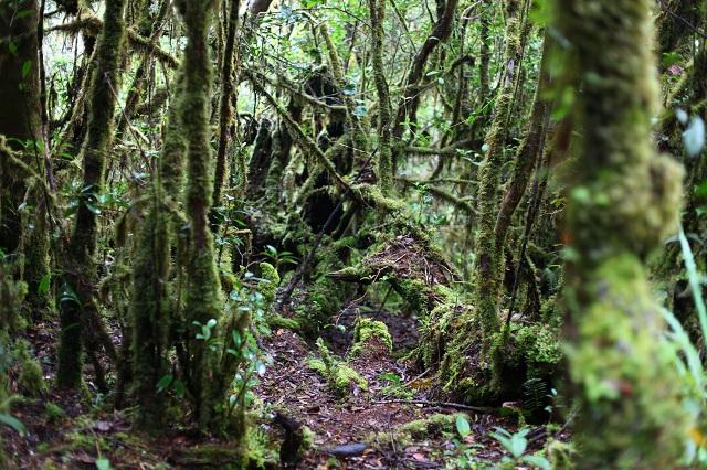 Mount Leuser National Park Indonesia