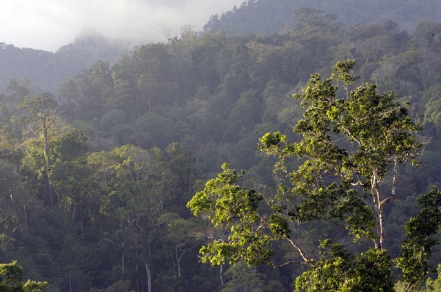 Tangkoko National Park, Java, Indonesia