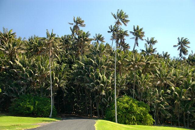 Lord Howe tropical island