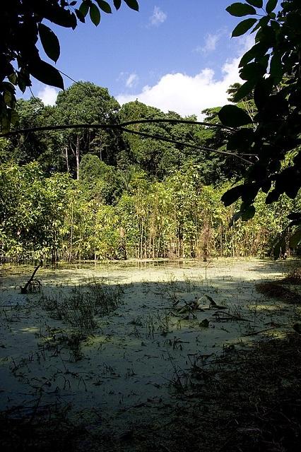 Zanzibar Island- Ngezi Forest