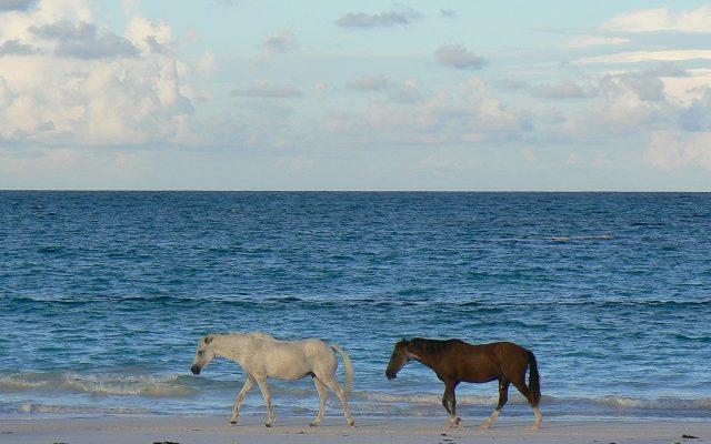 Harbour Island Bahamas Travel Guide